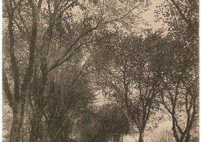 Cartes postales anciennes Boulevard du Midi ou de Fonicarde